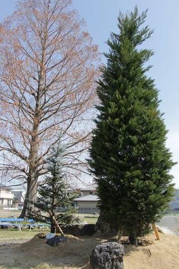 「ユメノ木」(右)と青年部30周年記念の木(左手前)