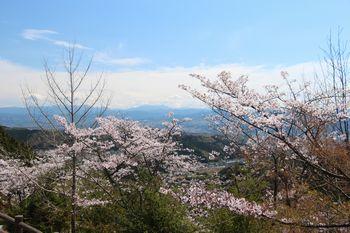 春は桜、秋は紅葉がきれいです