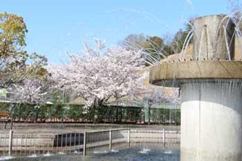運動公園の噴水