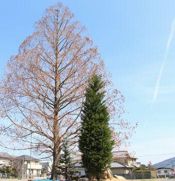 青空に向かって大きく伸びる「王様の木」と「ユメノ木」
