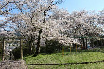 春の丸山公園