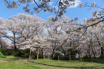 古佐田丸山公園