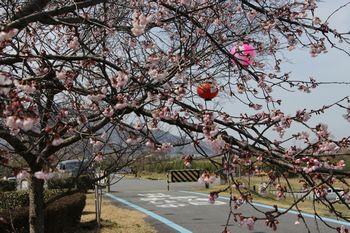 南馬場緑地広場の桜