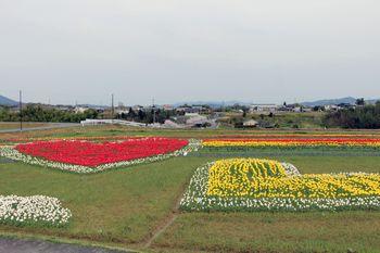 恋のチューリップ畑2020 赤いハートと黄色いハート