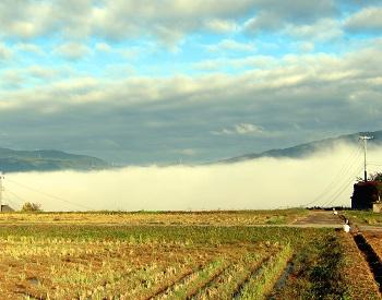 恋野チューリップ畑から紀の川方面に広がる雲海