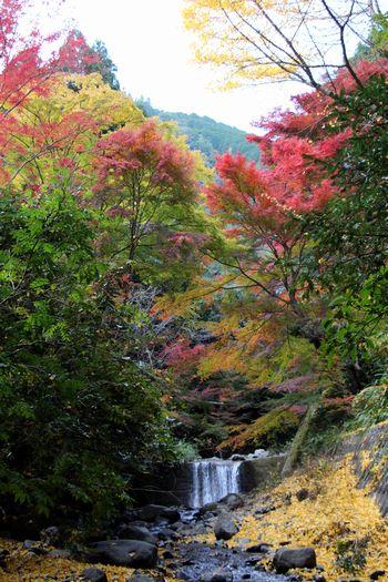 清流に浮かぶ紅葉