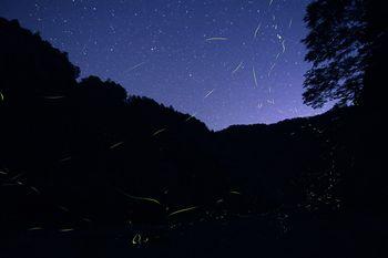 玉川峡 蛍と星空のステージ