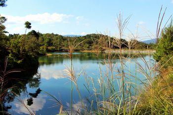 秋のススキが揺れる似賀尾池