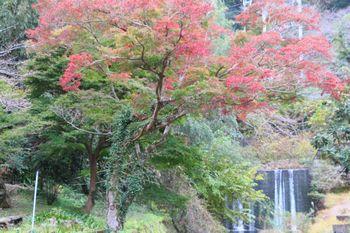 紀見峠駅付近の根古川にかかる紅葉