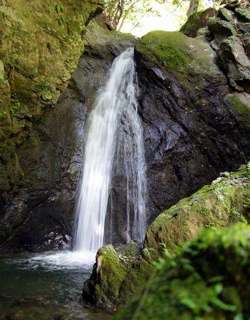 苔の岩盤を清らかに流れる嵯峨の滝